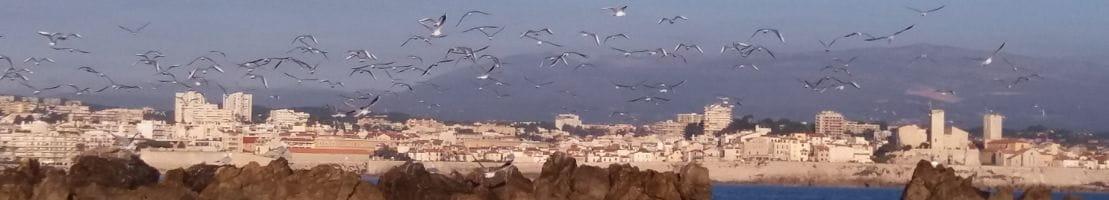 Vol de mouettes au dessus du port d'Antibes